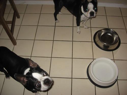 feed us