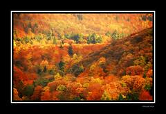°° autumnal beauty ° (harald_kirr) Tags: autumn trees reflection colours heidelberg germnay kirr orthon wowiekazowie colouricious naturewatcher colourartaward thegoldenmermaid