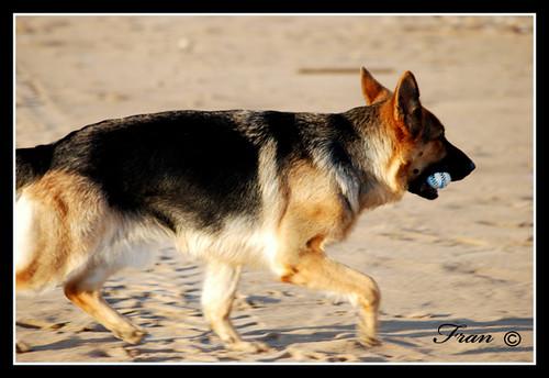 Mascota con su juguete