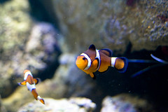 Nemo at the Aquadom and Sealife