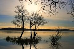 Loch Lomond (cumbo) Tags: winter reflection water this scotland you postcard asa sell bet could lochlomond jan08 cumbo afwrite