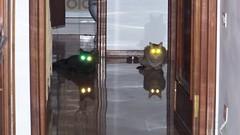 laser cats (Gu_ups) Tags: cat occhi laser gatto piero tarifa riflesso pierogattonero catnipaddicts