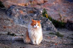 Long Beach's Homeless Kitty (Namisan) Tags: cute cat homeless kitty longbeach kitties cutecat homelesscat