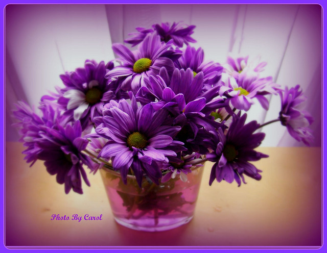 A Bowl Full of Purple Flowers by Tumbleweed Carole Photography