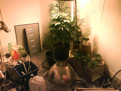 Jardin de drogue