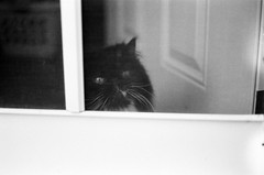 welcome cat (swank106) Tags: trix marzipan r3 expiredfilm