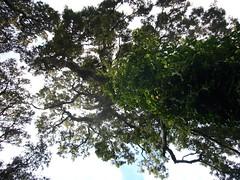 P1070674.JPG (kong niffe) Tags: france forest corse brando pske bastia mistral korsika brocciu