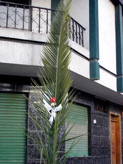Cotacachi-Festival-Palm