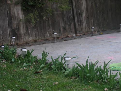 backyard 027