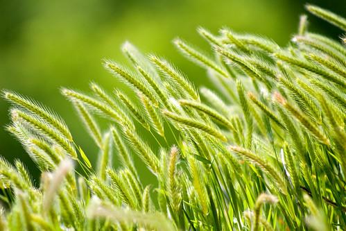grass 2a