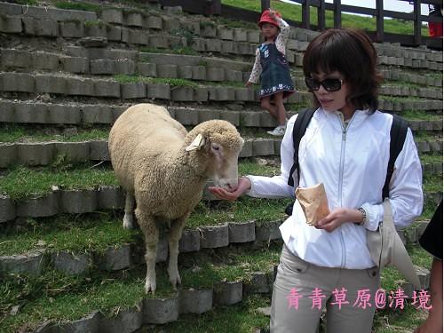 青青草原CIMG2748