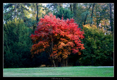 Autumn leaves (Jason V. Rhodes) Tags: red parco tree leaves autum albero autunno realms grazzanovisconti