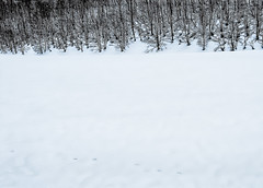 WhiteFoot.jpg (Klaus Ressmann) Tags: klaus ressmann asemmering austria forest landscape nikon snow winter design flcnat minimal softtones traces klausressmann