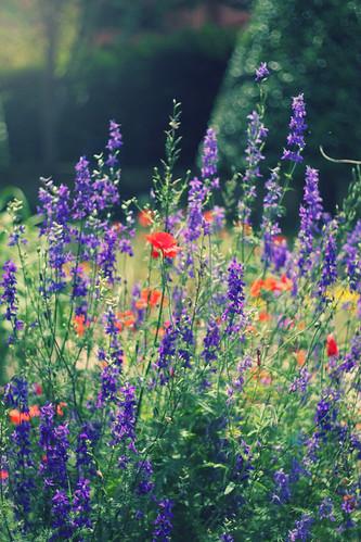 sunshine garden
