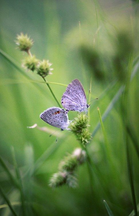 'butterfly