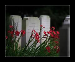 Brookwood..6 Oct 2007 (strussler) Tags: england italy cemetery canon eos woking italian italia military sigma surrey 5d brookwood blueribbonwinner mywinners impressedbeauty proudshopper 70300dgmacro angelogresti