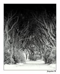 From darkness.... (Jacqueline Harte) Tags: trees blackwhite bravo 2007 mywinners impressedbeauty aplusphoto superbmasterpiece jacatac tangledwood jacquelineharte bwartaward