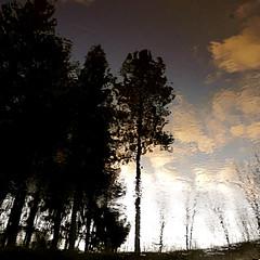 "Just add the Christmas lights!!! :))) (Denis Collette...!!!) Tags: winter snow canada reflection ice river lights twilight bravo quebec dusk hiver rivière reflet neige crépuscule glace sauvage magicdonkey flickrbest ""deniscollette"" «wildriver» world100f «sarahmclachlan» «christmaslights» «christmastrees» «lumièresdenoël» «sapinsdenoël» explorewinnersoftheworld"