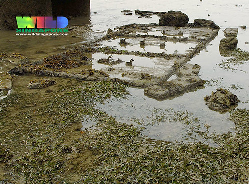 25 Nov 07: Rectangular slabs next to rare seagrasses