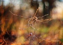 skeleton (futureancient) Tags: autumn winter 50mm dof bokeh dreamy f095 canonf095 leicam8 futureancient