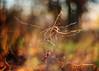 skeleton (futureancient) Tags: autumn winter 50mm dof bokeh dreamy f095 canonf095 leicam8 futureancient