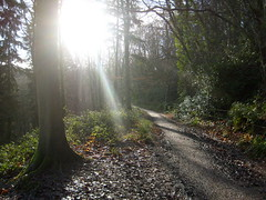 sunny leigh woods (dandavie) Tags: morning winter sun tree green leaves forest woods mud bright path sunny highlights rays sunrays leighwoods