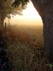 misty morning (Per Ola Wiberg ~ Powi) Tags: autumn mist nature beautiful october sweden loveit avenue soe hst 2007 musictomyeyes naturegroup beautifulearth supershot eker flickrsbest magicofnature golddragon ekebyhov beautifulcapture mywinners abigfave royalgroup platinumphoto peaceaward anawesomeshot flickrhearts magicalworlds ekebyhovsalln superbmasterpiece firsttheearth theothervillage superhearts flickrbronzeaward heartawards eperke exemplaryshotsflickrsbest photofaceoffwinner justlovelyphotos flickrsheaven betterthangood theperfectphotographer goldstaraward bestofautumnandwinter2007 flickrestrellas favesextreme bluespointofview goldendragonaward highqualityimages amazeandbeamazed thebestpicturegallery favesextreme060 beautifulshot 469photographers thedigitographer thelightpainterssociety doubledragonawards  artofimages visionaryartsgallery ablackrose platinumpeaceaward universeofnature visionaryartsgalleryplatinumgold bestpeopleschoice mygearandme level1photographyforrecreation level2photographyforrecreationsilver lightandshadowsofanytype