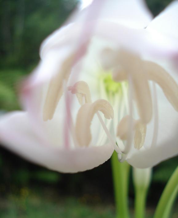flower sml