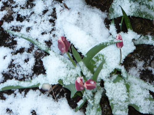 winterlicher Ostersonntag 2008 (05)