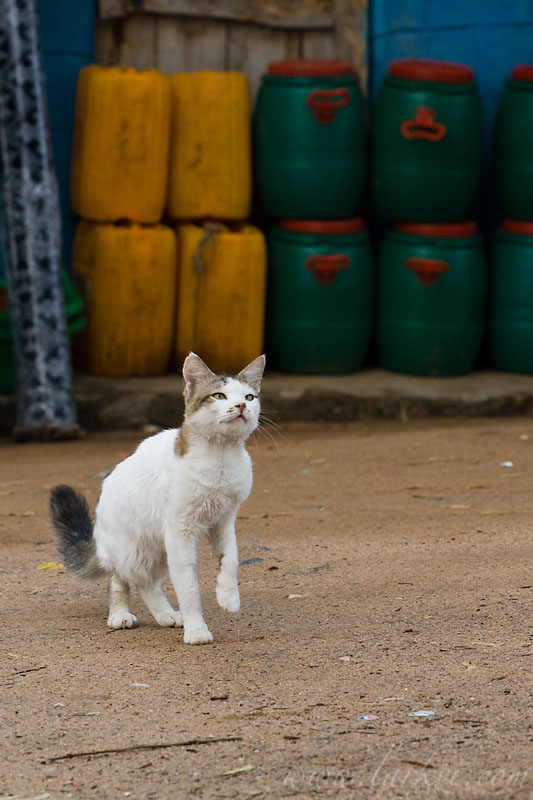Shop Cat, Southern Ethiopia, November 2007