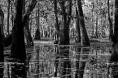 Mystery (edwardleger) Tags: white black moss louisiana noir swamp cypress 2008 blanc lakemartin theunforgettablepictures edwardleger edwardnleger