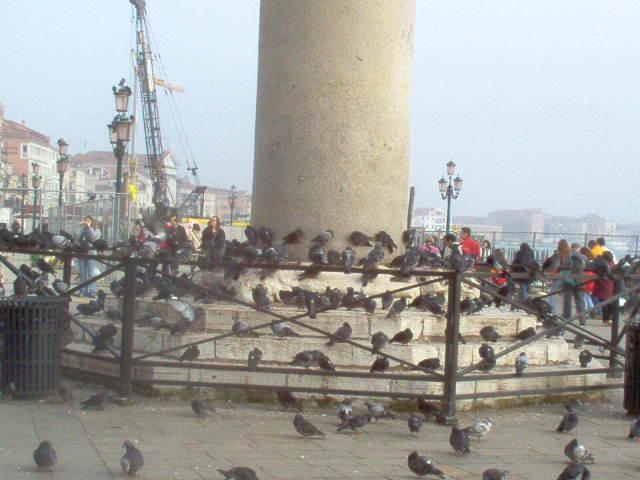 Europe 2005 Venice Pidgeons