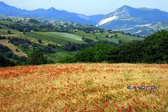 landscape (emorpi) Tags: italy italia di provincia marche jesi colline castelli ancona nikonstunninggallery marchigiane absolutelystunningscapes