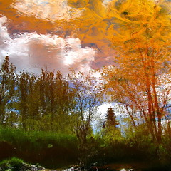 festive day in my wild river!!! / jour de fte dans ma rivire sauvage!!! (Denis Collette...!!!) Tags: wild canada reflection tree river festive bravo day quebec rivire reflet bec collette arbre denis sauvage themoulinrouge jourdefte portneuf firstquality wildriver festiveday fpg deniscollette pontrouge riviresauvage world100f multimegashot magicdonkeysbest jourfte