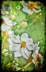 Floral Fragment (virtually_supine popping in and out) Tags: flowers orange colour macro green yellow manipulation textures layers experimentation marble photoshopelements ghostbones floralcreations