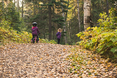 2016140untitled-19.jpg (meghanhuberdeau) Tags: autumn healthyliving nature exploration bikeride fall children younggirls leaves adventure woodedtrail heatlhylifestyle outdoors family cousins path walking