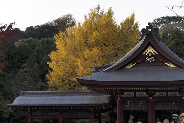 101128_145827_鎌倉_鶴岡八幡宮
