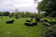 Day 362 15th May 2011 Cheshires Scenery (Chris Willis 10) Tags: simon bike sponsored dad ride cows cheshire observatory jodrellbank sait macclesfield radiotelescope bikethon simonsait