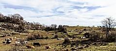 prateria della Mentorella...prairie (GIASTE) Tags: animali paesaggio