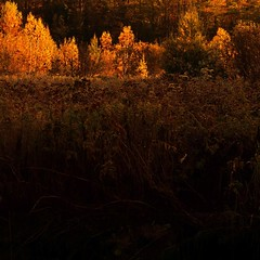 Overture!/Ouverture! (Denis Collette...!!!) Tags: morning autumn light wild canada beautiful angel forest automne bravo quebec lumire ange qubec marais bel bonjour marshland fort overture ouverture matin sauvage magicdonkey flickrsbest artlibre deniscollette theperfectphotographer enniomorricone theovertuture goodmorning world100f