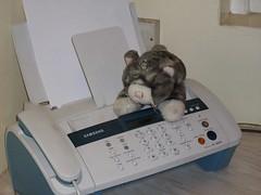 Cat on fax machine (by Secret Pilgrim)