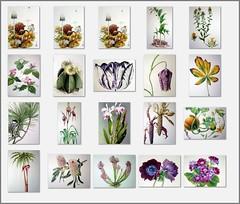 Botanical Art at CMU