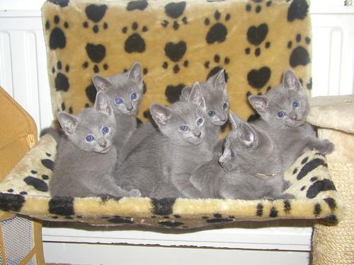 Ladoga's kittens 2043150019_6b0290c0c2