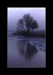 Tree (d.lindholm) Tags: winter reflection nature fog photo europe sweden uppsala scandinavia nikon18200mm hågadalen nikond40x