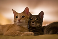 Poof & Fluffy (bryce_edwards) Tags: kittens fa50mmf14 pentaxk10d smcpfa50mmf14