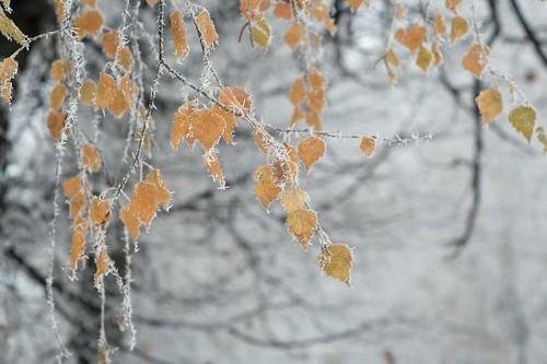 Зима встречает осень