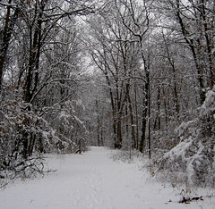 Winter Woods (Minkum) Tags: trees winter fab white snow nature virginia woods soe magicmoments breathtaking lifeasiseeit mywinners groovygang superbmasterpiece runnymedepark diamondclassphotographer bestofwinter absolutelystunningscapes