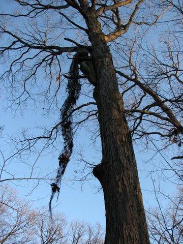 leelinau in the tree fenton mo 260108