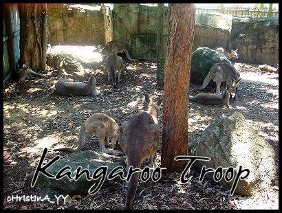 Kangaroo: Kangaroo Troop