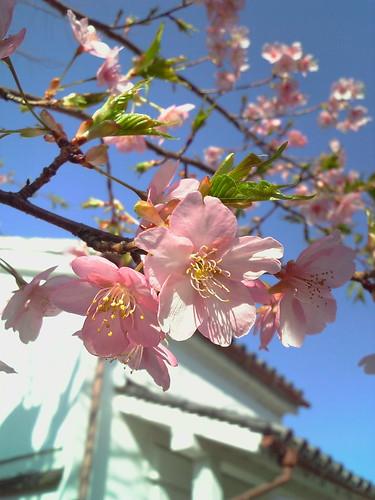 CherryBlossom@912SH3